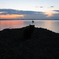 Нигозеро :: Андрей Божьев
