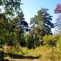 Сентябрь в  лесу. :: Анатолий