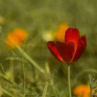 Последнее цветение :: Вера Арасланова