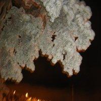 Волшебное дерево :: Елена Павлова (Смолова)