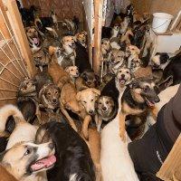 Будни одного приюта для бездомных собак :: Анатолий Тимофеев