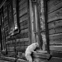 Проникновение :: Ирина Зайцева