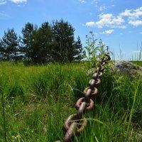 Связующая цепь вечного лета. :: Inna Kort