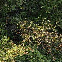 Осень начинается в августе :: Nikolay Monahov