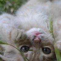 Мууур :: Valeria