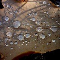 Осень... :: Ирина