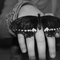 бабочка :: Елена Шмойлова