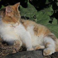 кошка :: Ирина Рыкина