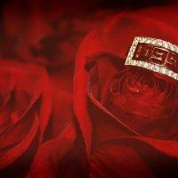 Алые розы :: Ольга Гомозова