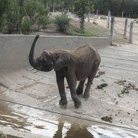 Слон :: Ирина Корнеева