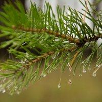 капли дождя :: Ната Анохина