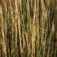 Natural patterns :: Anna Lipatova