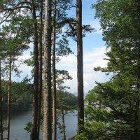 Валаам, вид на озеро с Елеонской горы :: Елена Смолова