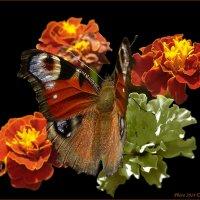 Сентябрьская бабочка :: Виктор Марченко