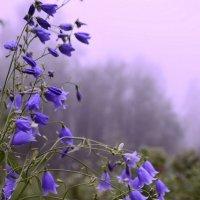 В тумане утреннем седом :: galina tihonova