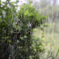 В тумане густом паутина развесила нити свои :: galina tihonova