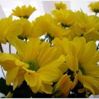 Букет жёлтых хризантем... :: Тамара (st.tamara)
