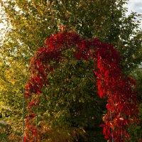 Здесь приходит Осень в сад, обняв багрянцем виноград . . . :: Константин Фролов