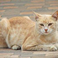 Кот в пастельных тонах :: Алексей Меринов