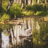 Гусь на пруду :: Мария Михайлова