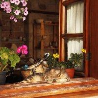 кошка на окне :: Наталья Курманалиева