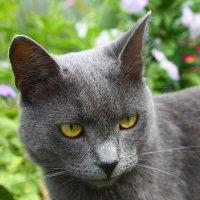 Что думают коты... :: Allekos Rostov-on-Don
