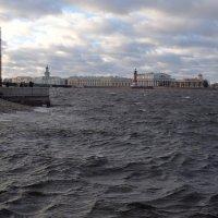 Петербургская традиция... :: tipchik