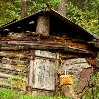 Лесной приют. :: Galina S*