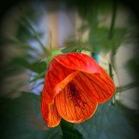 Аленький цветочек :: Сергей Карачин