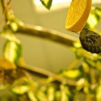 Бабочки кушают) :: Кристина Бессонова