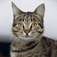 Мой кот Кеша :: Виктор