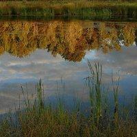 Осень на реке. :: nadyasilyuk Вознюк