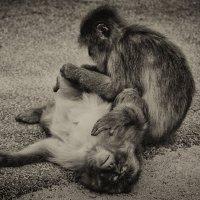 обезьянки :: Slava Hamamoto