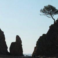 в сумерках на пляже!! :: Марина Аннина