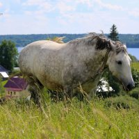 конь :: Екатерина Кудым