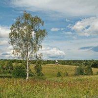 Во поле берёзонька стояла... :: Олег Попков