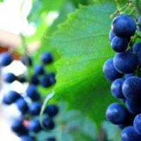 виноград :: Марьям