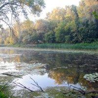 утром на озере :: Валерия Шамсутдинова