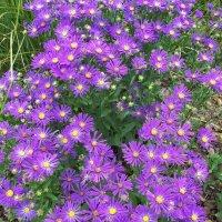 Цветы ботанического сада. :: Виктор Елисеев
