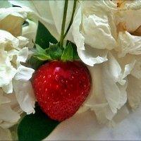 В нежных объятиях белых пионов... :: Нина Корешкова