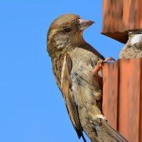 зацепинг по птичьи) :: linnud
