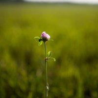 Один в поле - не воин? :: Anna Lipatova