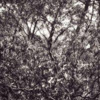 Ветви дерев :: DeADDY HELLOFF