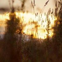 Трава у дома :: Анастасия Шатоба