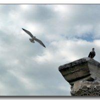 Полет над Херсонесом :: Ольга Голубева