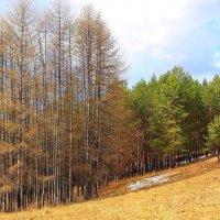 Прозрачный лес :: Галина Стрельченя