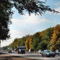 Осень у дороги... :: Тамара (st.tamara)
