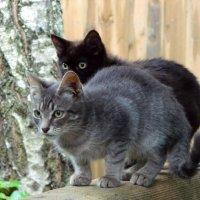 Серый и Ночес :: Алла Захарова