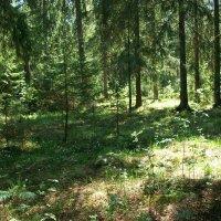 Прогулка по лесу. :: Виктор Елисеев
