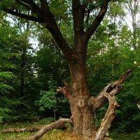 Осень жизни дерева DSC08449 :: Андрей Лукьянов
